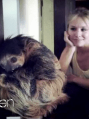 Here's Kristen Bell with a sloth.
