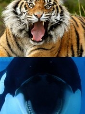 blackfish film