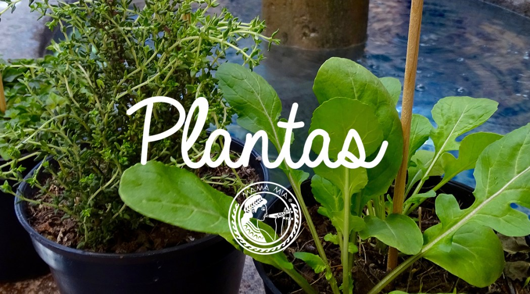 Plantas MAMA MIA