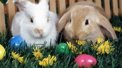 frohe Ostern - PlayStation Forum