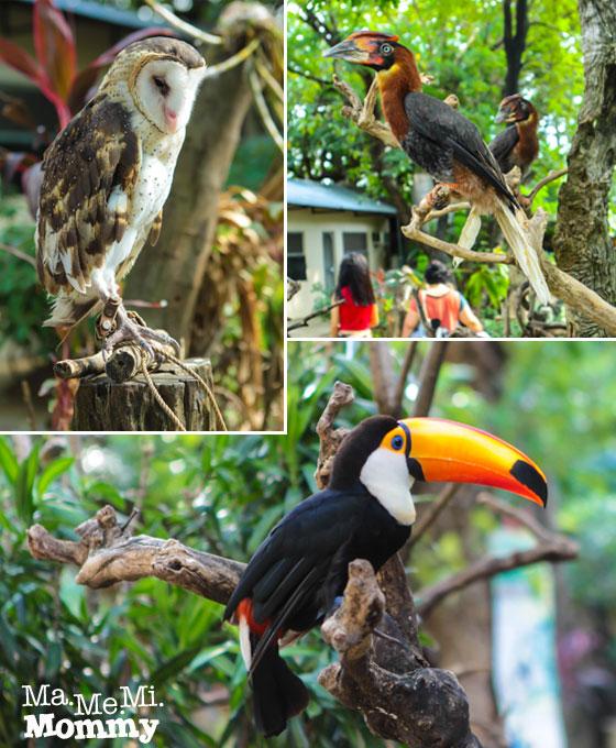 Kinder Zoo Birds