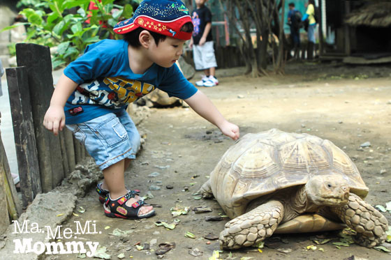 interaction turtle