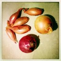 Omas Hausmittel - die Zwiebel