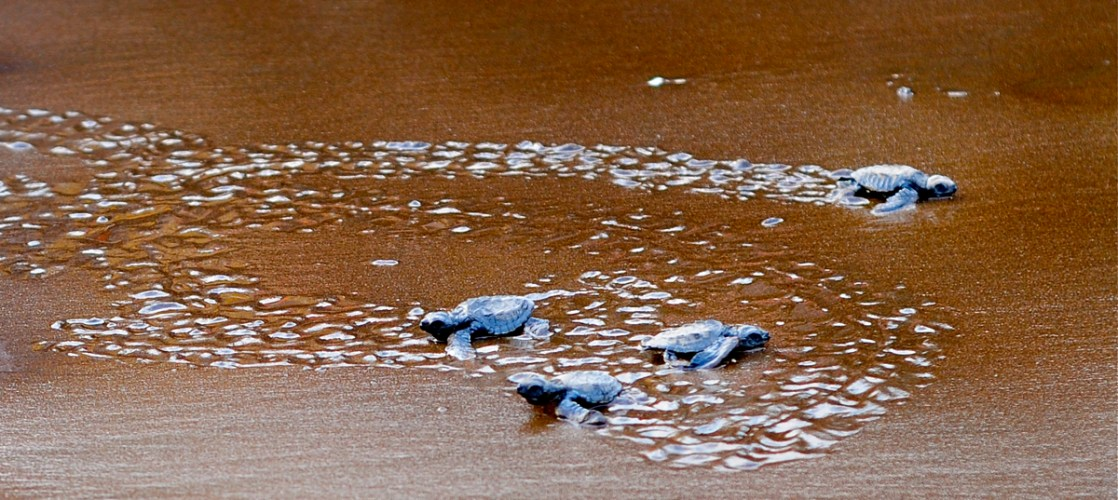 Velas-The village for turtles