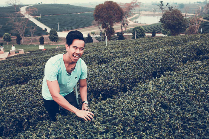 guy_picking_tea_leafs