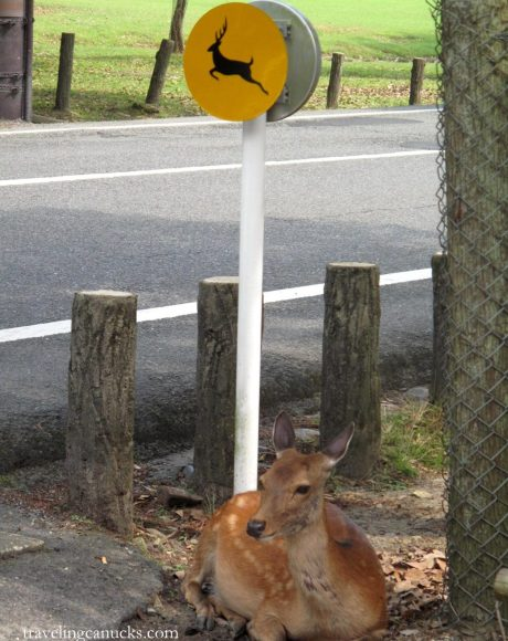 TravelingCanucks Japan.deer-sign Travel Photo Roulette