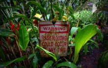 Tropical Slalom: Navigating Maui's Road to Hana