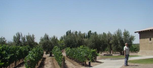 Vinícola nas vizinhanças de Mendoza AR