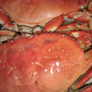 Fresh Ocean Crab 2Ups