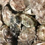 Fresh Willapa Bay Oysters