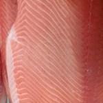 Columbia caught King Salmon