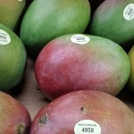 Fresh 9 Count Mangos just $10 a case!