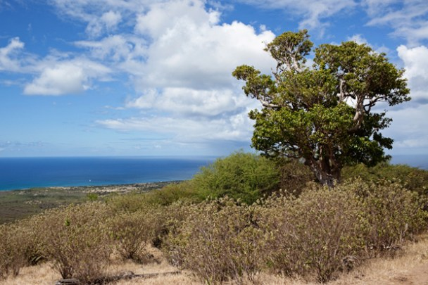 Saddle Hill Nevis