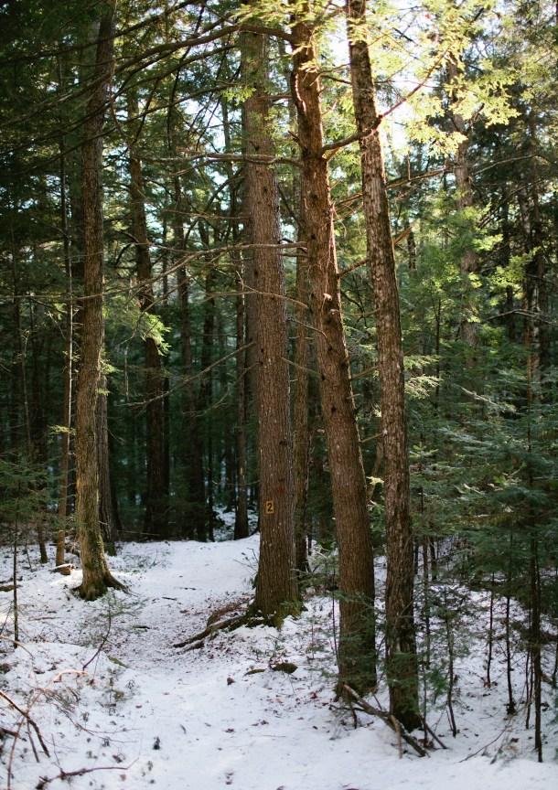 Hemenway State Forest Tamworth