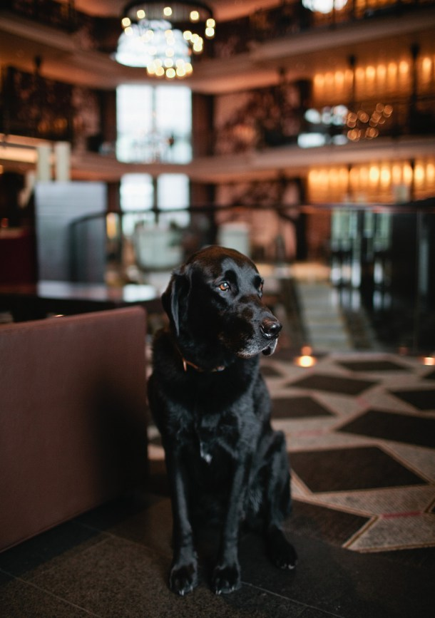The Liberty Hotel Pet Friendly