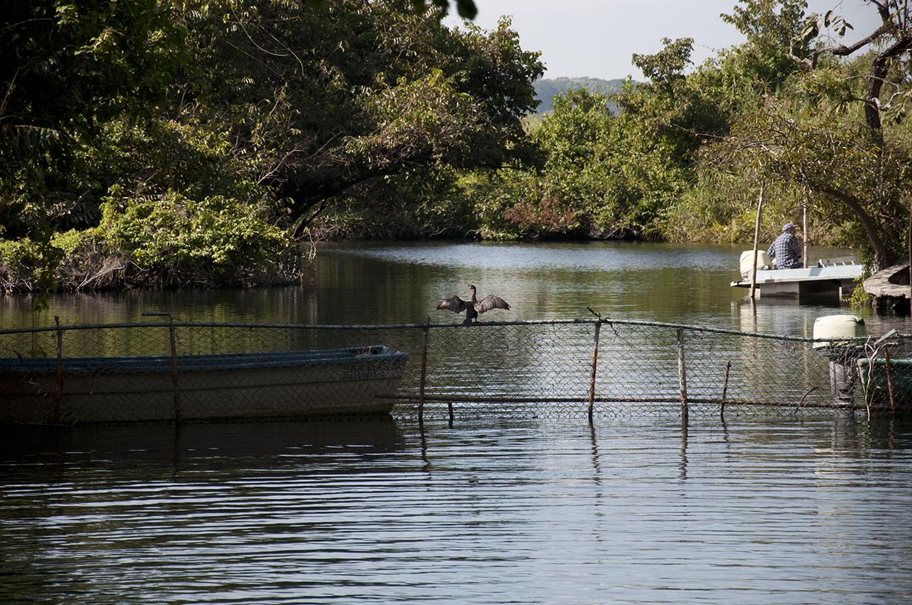 mangroves-web