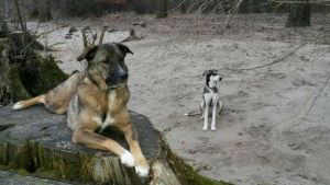 Beobachtungs-Training in Marcels Hundeschule