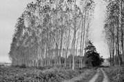 Field Road, Cordenons, Italy