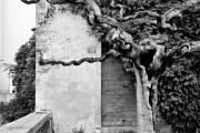 Centurion Tree, Cordigniano