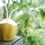 mariage, décoration, nature, coco,