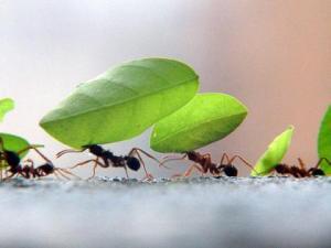 formigas trabalhando