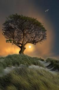 tree printerest