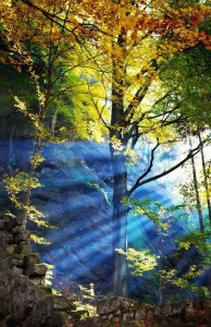 sol na floresta