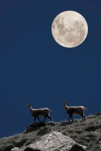 full moon capricornio - three rivers deep