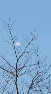 Lua Corcunda - Creuza Medeiros, em Chapada dos Guimarães-MT