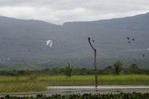 Aves no Pantanal Marimbus