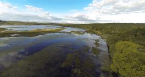 Programa Aprovado - Pantanal Capa