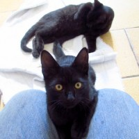 2 Gatinhas Precisando de um Lar