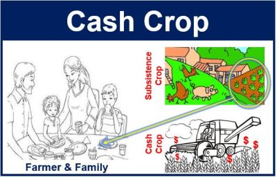 Cash crop - definition and meaning - Market Business News