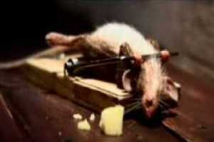 rato malhando