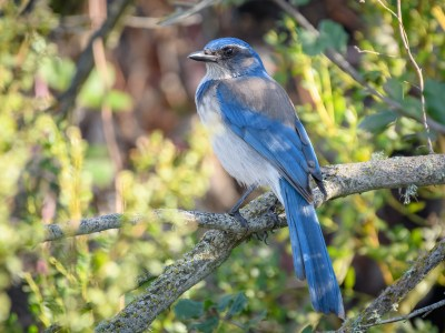Park It: Great backyard bird count