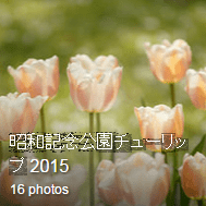 Tulip2015_Flickr_Link