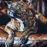 Dog & Leather