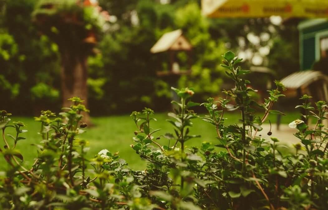 Consejos para cuidar tu jardín en otoño