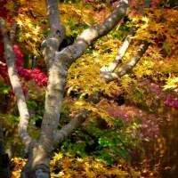 411 法華寺 境内の紅葉
