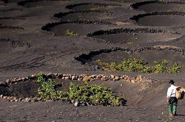 Lanzarote, tierra de vino
