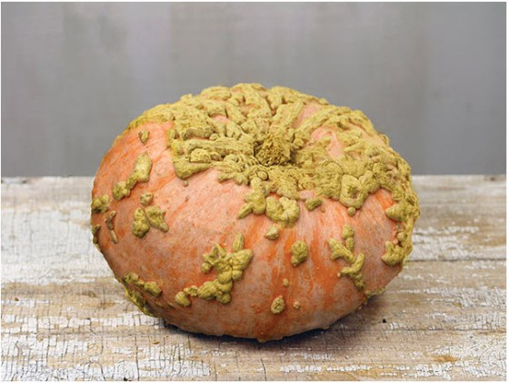 This image of Galeux d' Eysines is from rareseeds.com.  This what I wanted to grow.  The green and orange squash in the first picture is what I got.