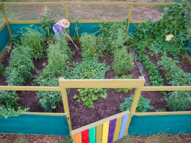 beautiful-vegetable-garden