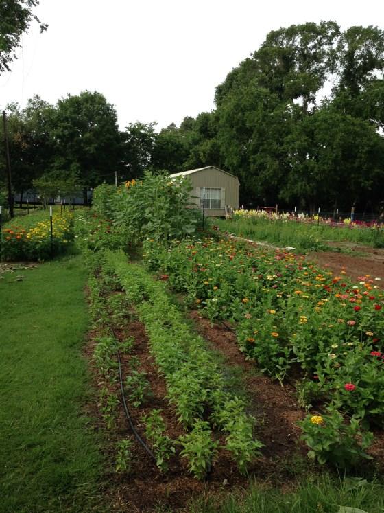 FM-Flower-Farm