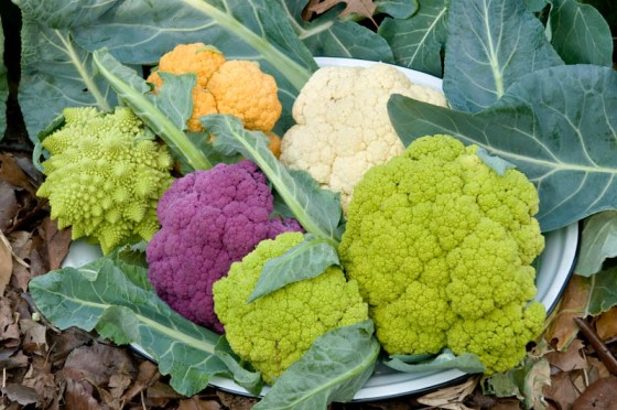 Cauliflower doesn't have to be white!  Try some of the colored varieties.  Photo by Bruce Leander