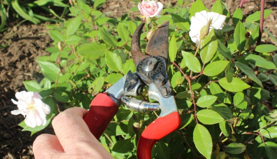 My favorite pruner is the Felco F7.  The F7 is $58 and worth every penny!