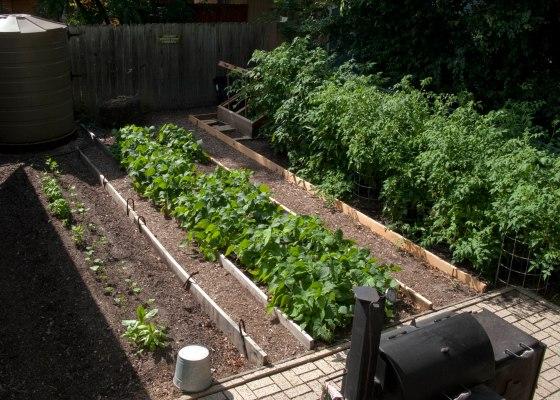 organic-garden-austin