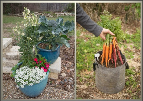 vegetables-in-containers