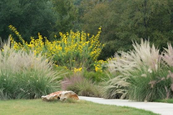 big-muhly-grass