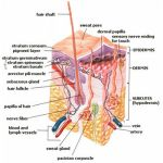 Skin Grafting-Types of skin grafts