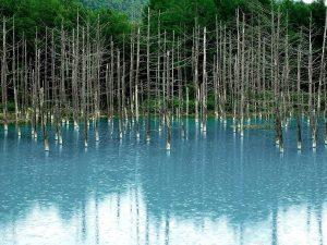 北海道美瑛町の人気観光スポット「青い池」